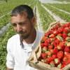 Spania reintroduce permisele de munca pentru romani