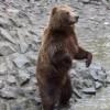 O femeie a fost atacata de un urs in timp ce culegea ciuperci