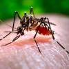 Panica in spitale din cauza viruslui West Nile