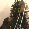 Echipa cateilor care decoreaza de minune pomul de Craciun (VIDEO)