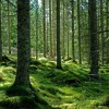 BOR pierde padurile Bucovinei
