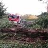 Furtuna care a afectat Capitala a curmat o viata/Copaci cazuti peste masini