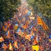 Catalonia, pusa in colivie