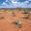 Desertificarea Romaniei i-a alertat pe europeni. Nu si pe noi