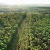 A fost adoptat proiectul de lege cu privire la înființarea perdelelor forestiere de protecție
