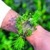 Ceas din plante si licheni