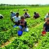 Fermierii pot angaja tineri pe banii UE