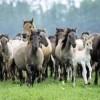Masagetii, primii imblanzitori ai cailor