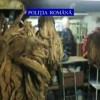 Cu fabricuta de tigari improvizata in subsolul blocului, pana ce politia a intrat pe fir