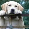 Primul cod juridic pentru animale