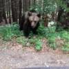 Muscata de urs, in zona Lacului Sf. Ana. Turista ar fi vrut un selfie