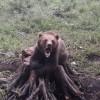 Ingrijitori atacati de ursi, la Zoo