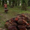 Biscuitul Oreo, vinovat de despaduriri masive