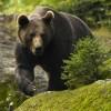 Tanar mort dupa ce a fost atacat de un urs