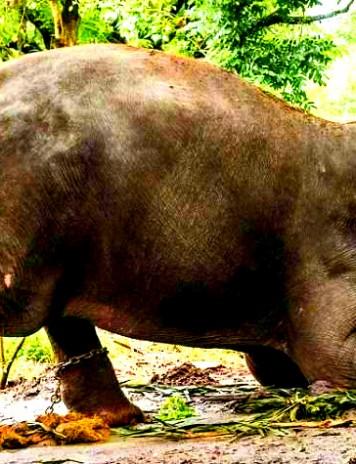 VICTORIA ECOLOGIȘTILOR: S-a interzis vânzarea de elefanți către grădinile zoologice
