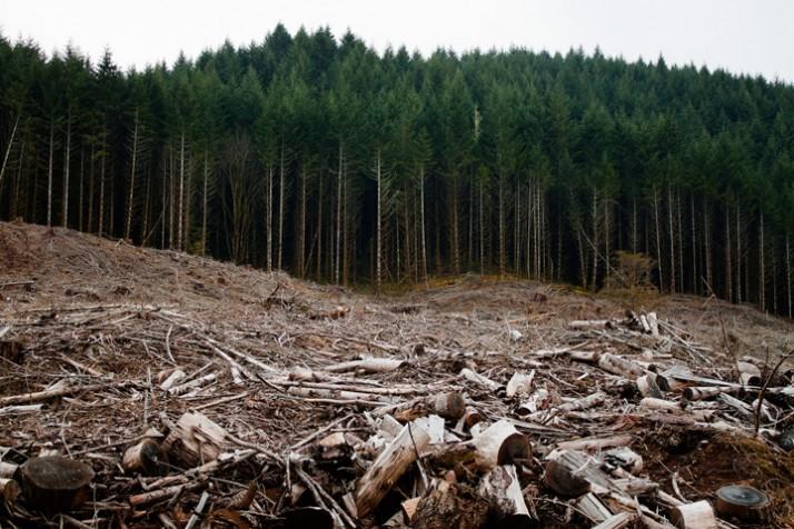 Radarul pădurilor, ucis de bâlbele autorităților