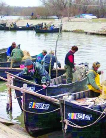 Peștele săracului se întoarce pe masa românilor
