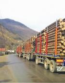 În 2018, mafia pădurilor a tăiat peste 200.000 metri cubi de lemn