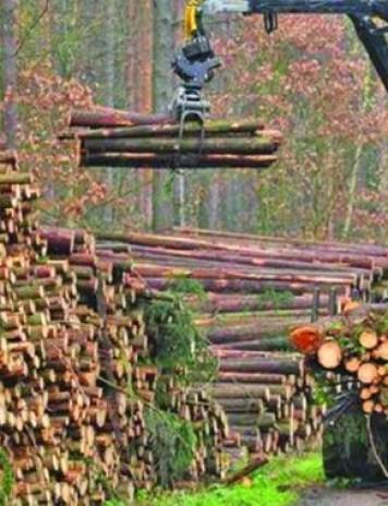Tăierea pădurilor, un business de miliarde