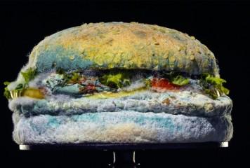 Hamburgerul cu mucegai