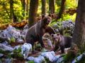 Prahova: Jandarmii intervin pentru îndepărtarea urşilor (VIDEO)