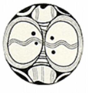 ou cucuteni 283x300 Scrierea sacra a aparut in Carpati