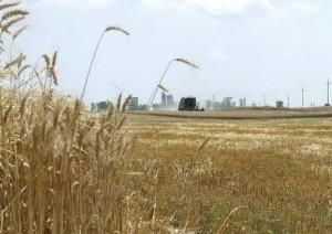 suprafele agricole 300x212 Terenurile agricole, mai profitabile pentru investitori decat metalele pretioase. Vezi de ce!