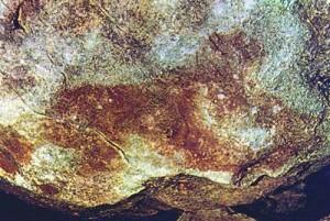 5 felina cuciulat 6 300x201 Cea mai veche arta rupestra din Europa