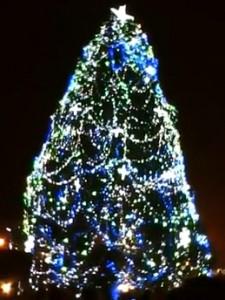 brad baia mare 225x300 UITE cum a fost decorat cel mai mare pom de Craciun din Romania!  VIDEO