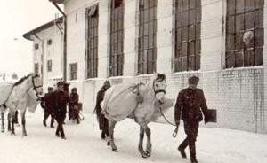 attachment4 300x184 Marele viscol din Romania, din februarie 1954