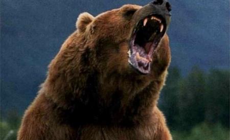 urs atac padurar Dusi de urgenta la spital, dupa ce au fost atacati de un urs, in Harghita