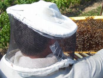 albine 350x264 Trei oameni au fost atacati de albine, in Buzau: doi au murit