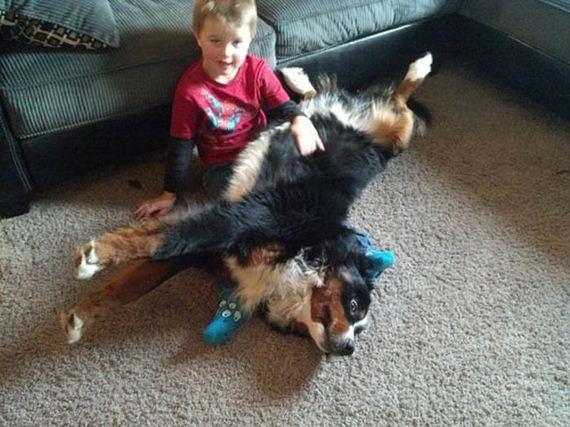 18 dogs 17 Cainii – compania perfecta pentru joaca! Uite i cat sunt de simpatici! (FOTO)