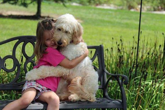 27 dogs 17 Cainii – compania perfecta pentru joaca! Uite i cat sunt de simpatici! (FOTO)