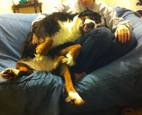 28 dogs 17 Cainii – compania perfecta pentru joaca! Uite i cat sunt de simpatici! (FOTO)