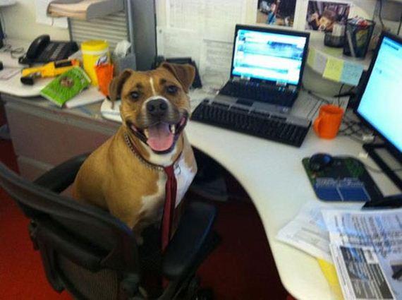 40 dogs 17 Cainii – compania perfecta pentru joaca! Uite i cat sunt de simpatici! (FOTO)