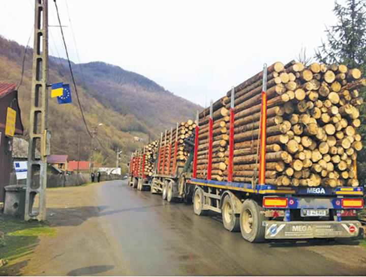 lemn 1 De ce tine mortis ministrul Apararii sa revina la Interne: Mircea Dusa, bagat in mafia lemnului din Harghita!