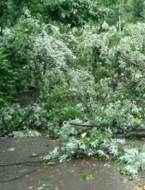 copaci furtuna COD GALBEN. Vantul va sufla cu putere in mai multe zone