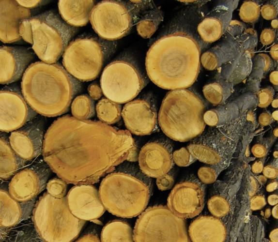 lemne Perchezitiisi un prejudiciu de peste 25 milioane de euro. Holzindustrie Schweighofer, in vizorul DIICOT. Reactia companiei