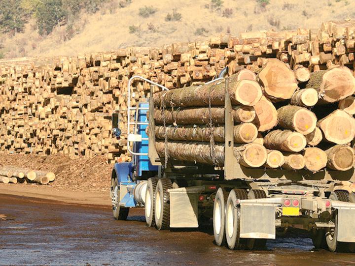 camion busteni lemn furat Ministerul Mediului controleaza lemnul taiat ilegal de la Schweighofer