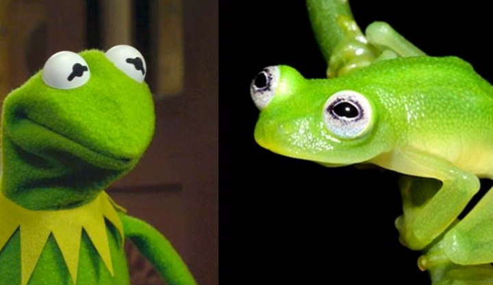 kermit Kermit exista in realitate!