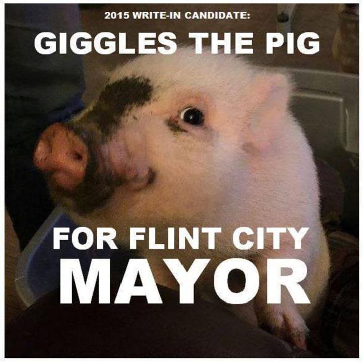 porc Un porc, in cursa pentru un post de primar in Michigan