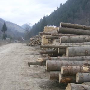 lemn 300x300 Afaceri cu lemn, in vizorul politistilor: 156 de perchezitii in Capitala si 24 de judete