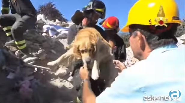 catel Gasita in viata, printre ruine, la 15 zile dupa cutremurul din Italia! (VIDEO)
