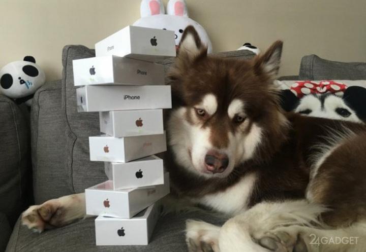 telefoane caine Fiul unui miliardar i a cumparat cainelui sau opt telefoane iPhone 7!
