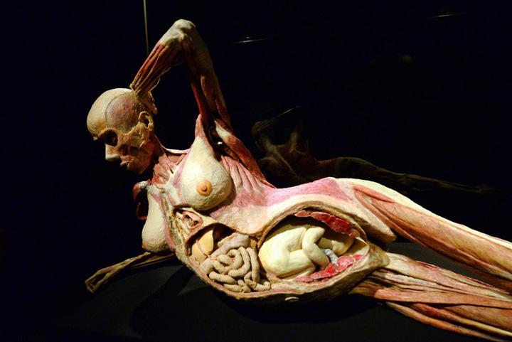 milano1 O controversata expozitie de cadavre la Milano
