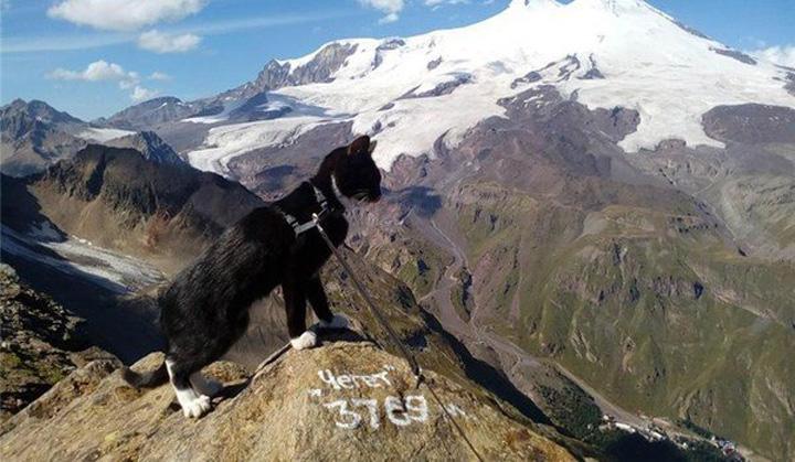 motanm pe munte A cucerit Acoperisul Europei cu un motan pe umar