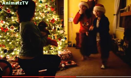 catelus dar Cand surpriza din cadoul de Craciun e un catelus, reactiile sunt pe masura (VIDEO)