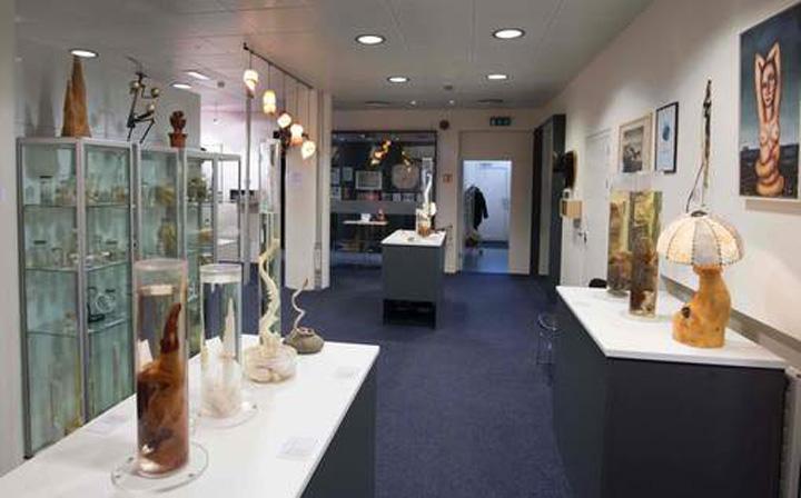 media xll 9293204 Bine ati venit la muzeul penisului!