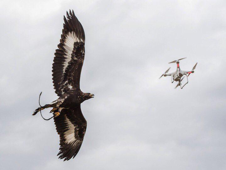 vulturt fra Armata franceza si a tras vulturi anti drone